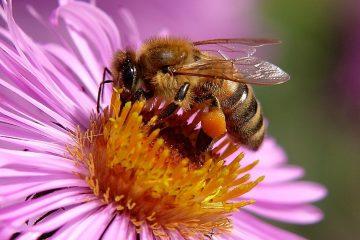 Nachhaltiges Bienenprojekt 2020